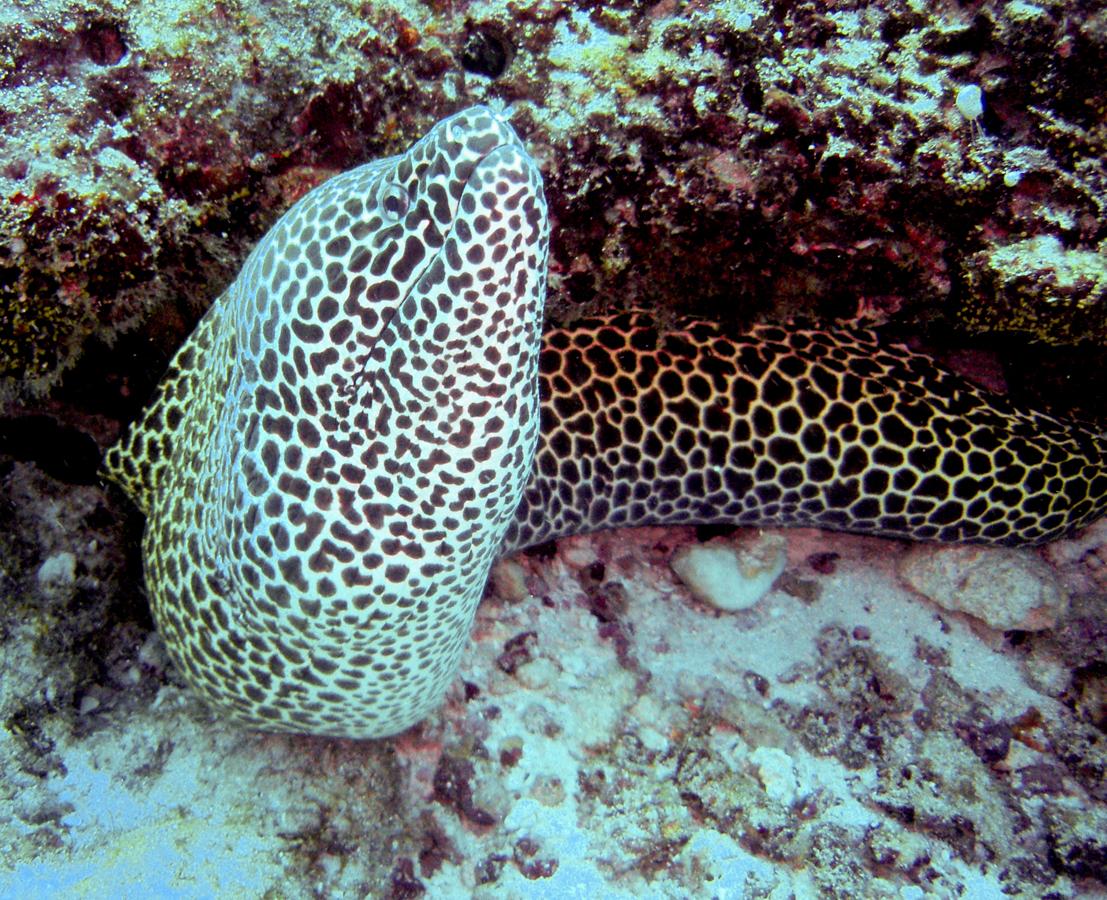 Malediven_Tauchsafari_Zwei Wochen_Weihnachten_Südatolle_Horizon III-15