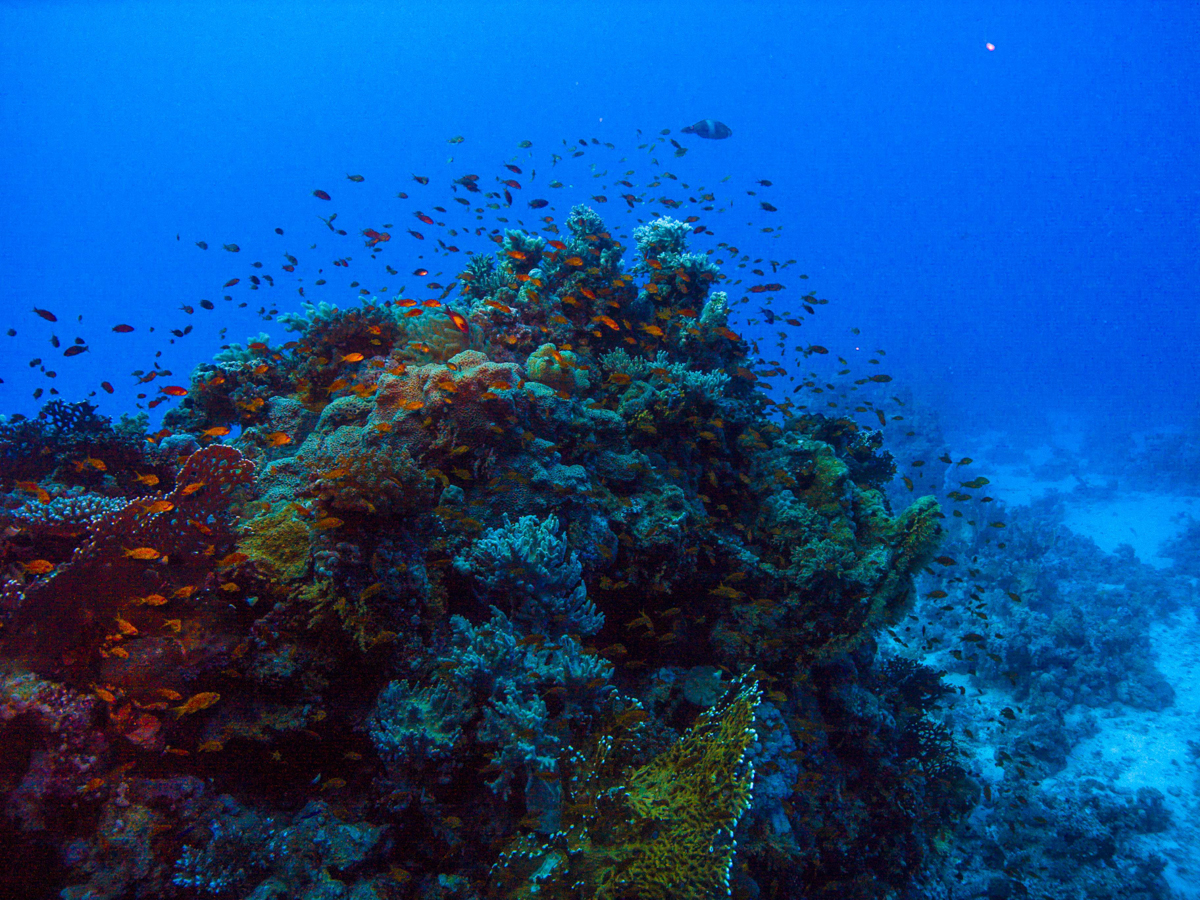 Ägypten_Individualreise_Auto_Lahami_Marsa_Alam_El_Quesir_Marsa_Shagra_Lahamy_Red_Sea_Diving_Safari-5