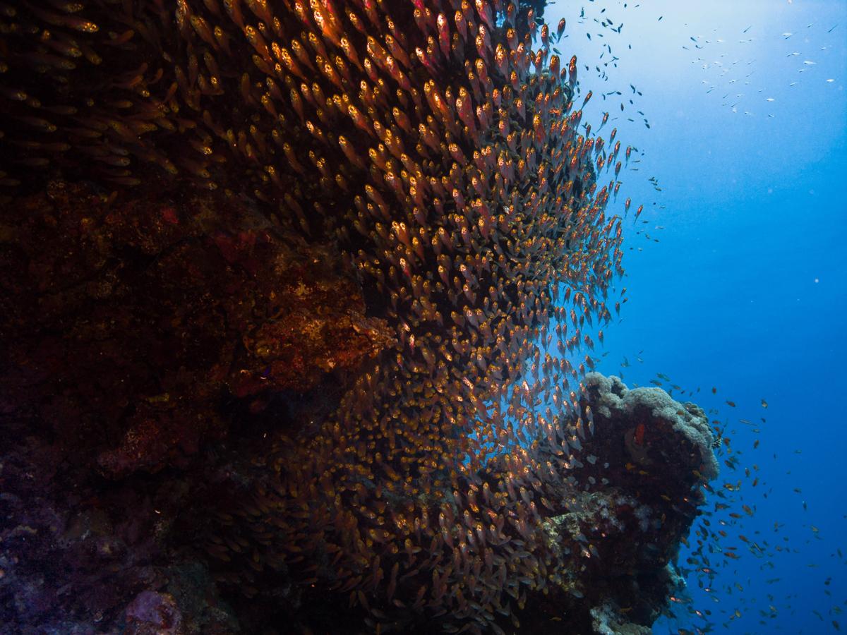 Ägypten_Individualreise_Auto_Lahami_Marsa_Alam_El_Quesir_Marsa_Shagra_Lahamy_Red_Sea_Diving_Safari_Hurghada-33