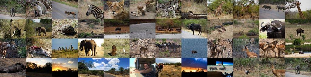 Krüger Nationalpark