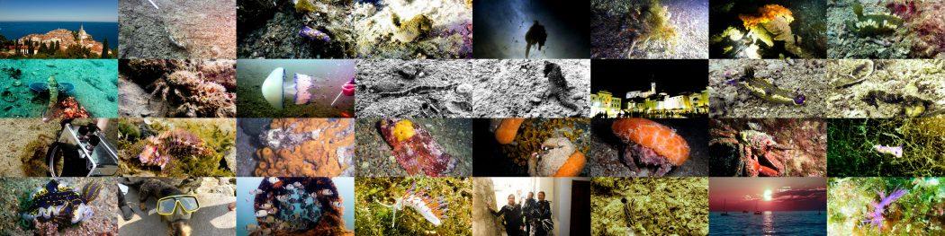 Muck Diving in Europa . Slowenien