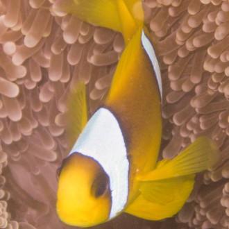 Ägypten_ Golden_Dolphin_StJohns_Rocky_Tauchsafari