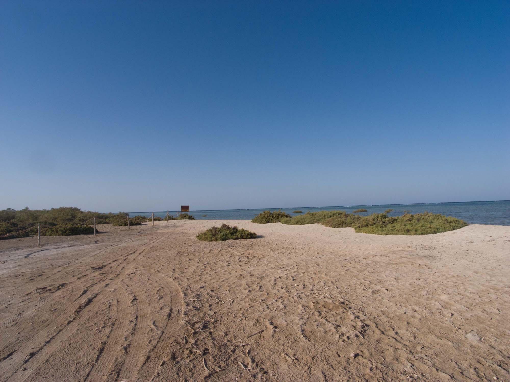 Lahami_Bay_ Red Sea Diving Safari_Rotes Meer_Tauchen-4