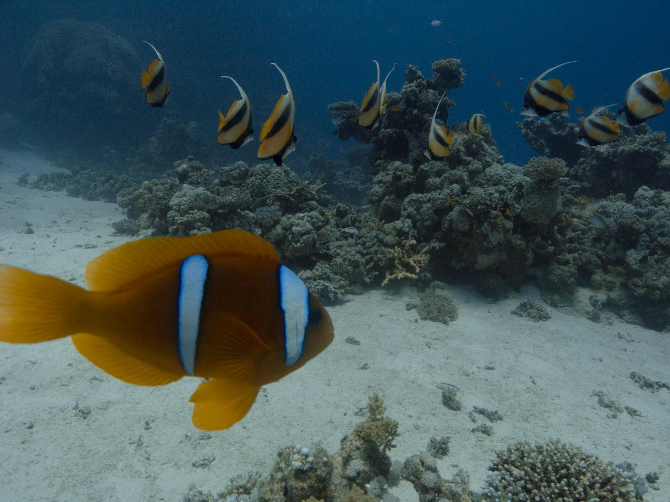 Lahami_Bay_Rotes_Meer_Red Sea Diving Safari_-11