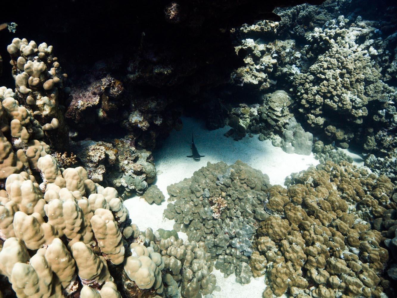 Lahami_Bay_Rotes_Meer_Red Sea Diving Safari_-3