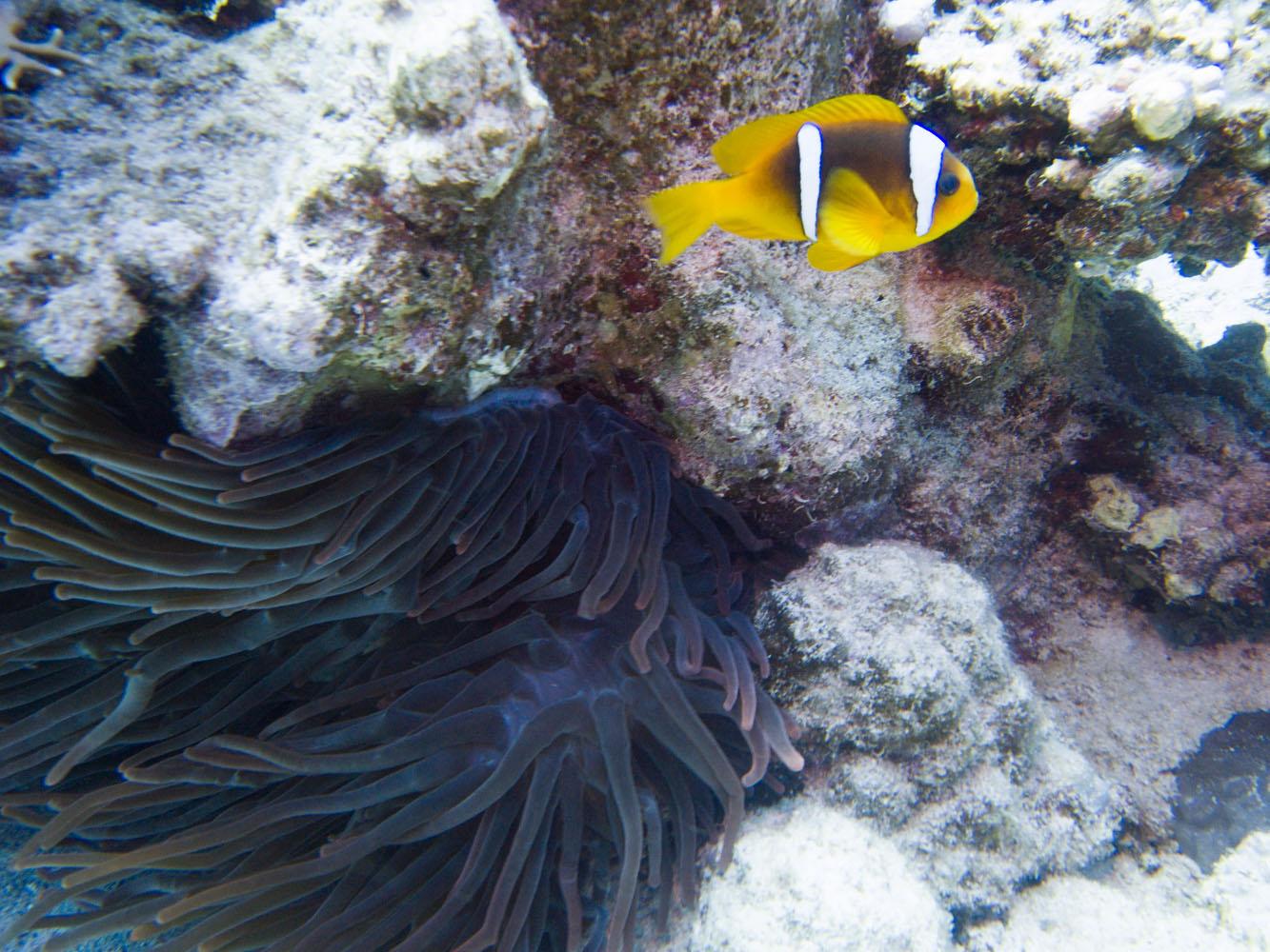Lahami_Bay_Rotes_Meer_Red Sea Diving Safari_-5