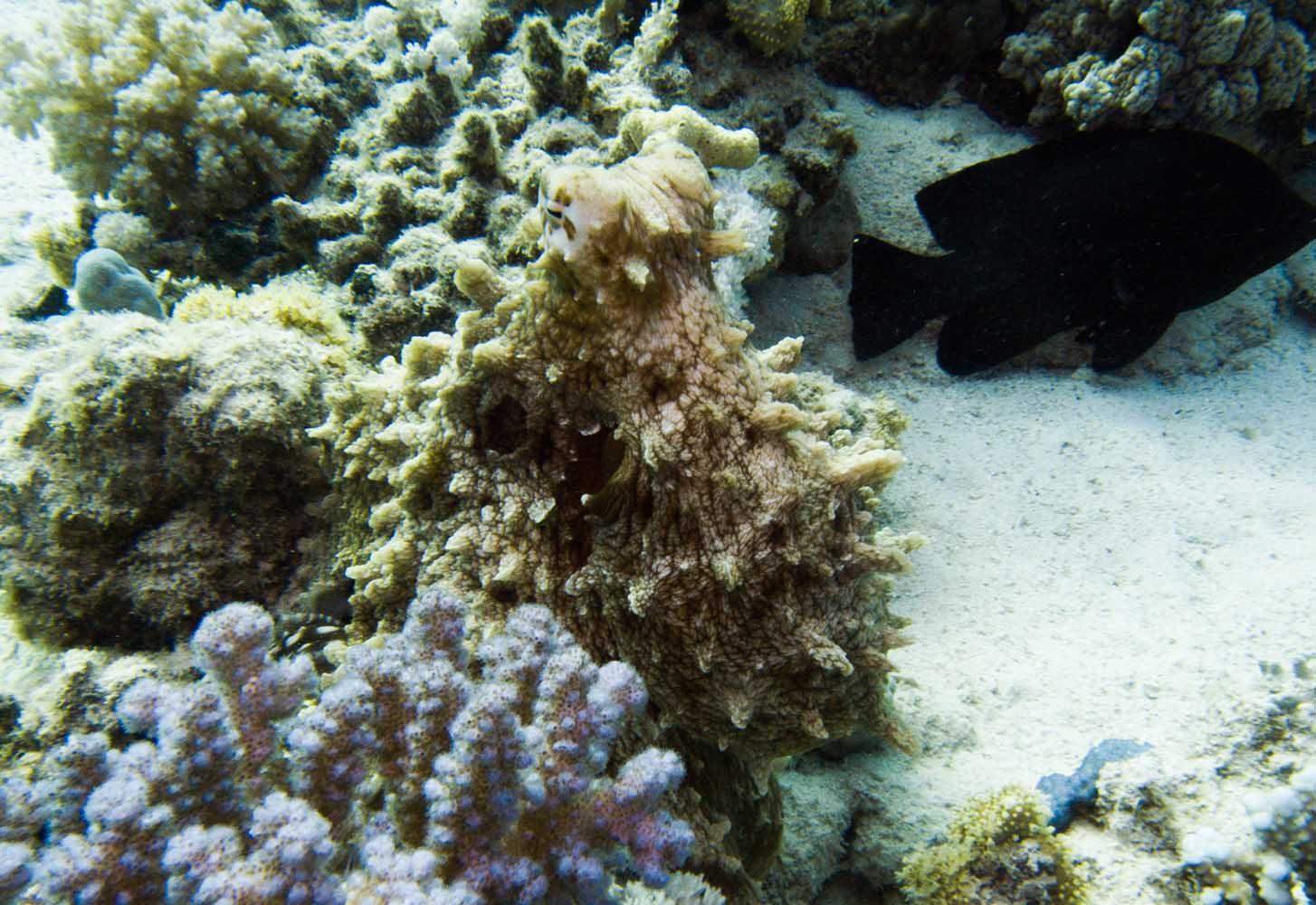Marsa_Alam_Marsa_Shagra_Red Sea Diving Safari-22
