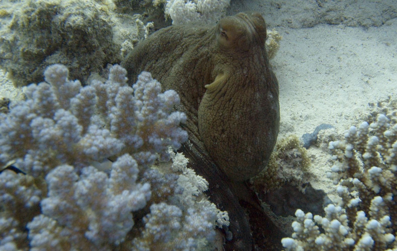 Marsa_Alam_Marsa_Shagra_Red Sea Diving Safari-8