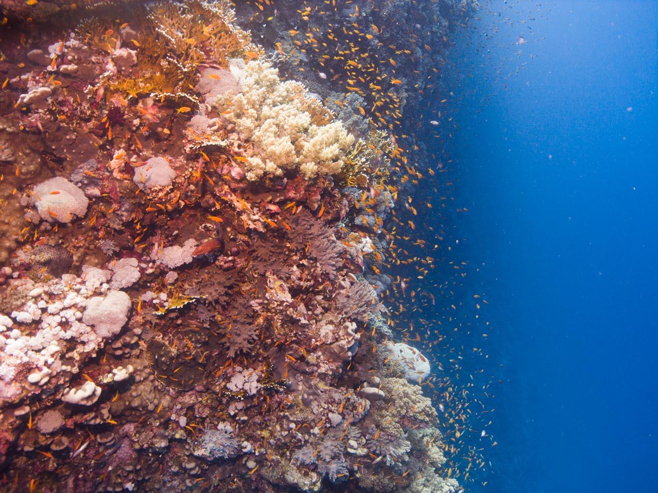 Marsa_Alam_Shagra_Red_Sea_Diving_Safari_Rotes_Meer-10