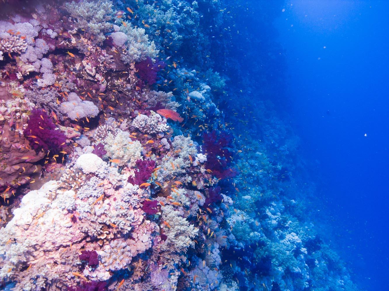 Marsa_Alam_Shagra_Red_Sea_Diving_Safari_Rotes_Meer-9