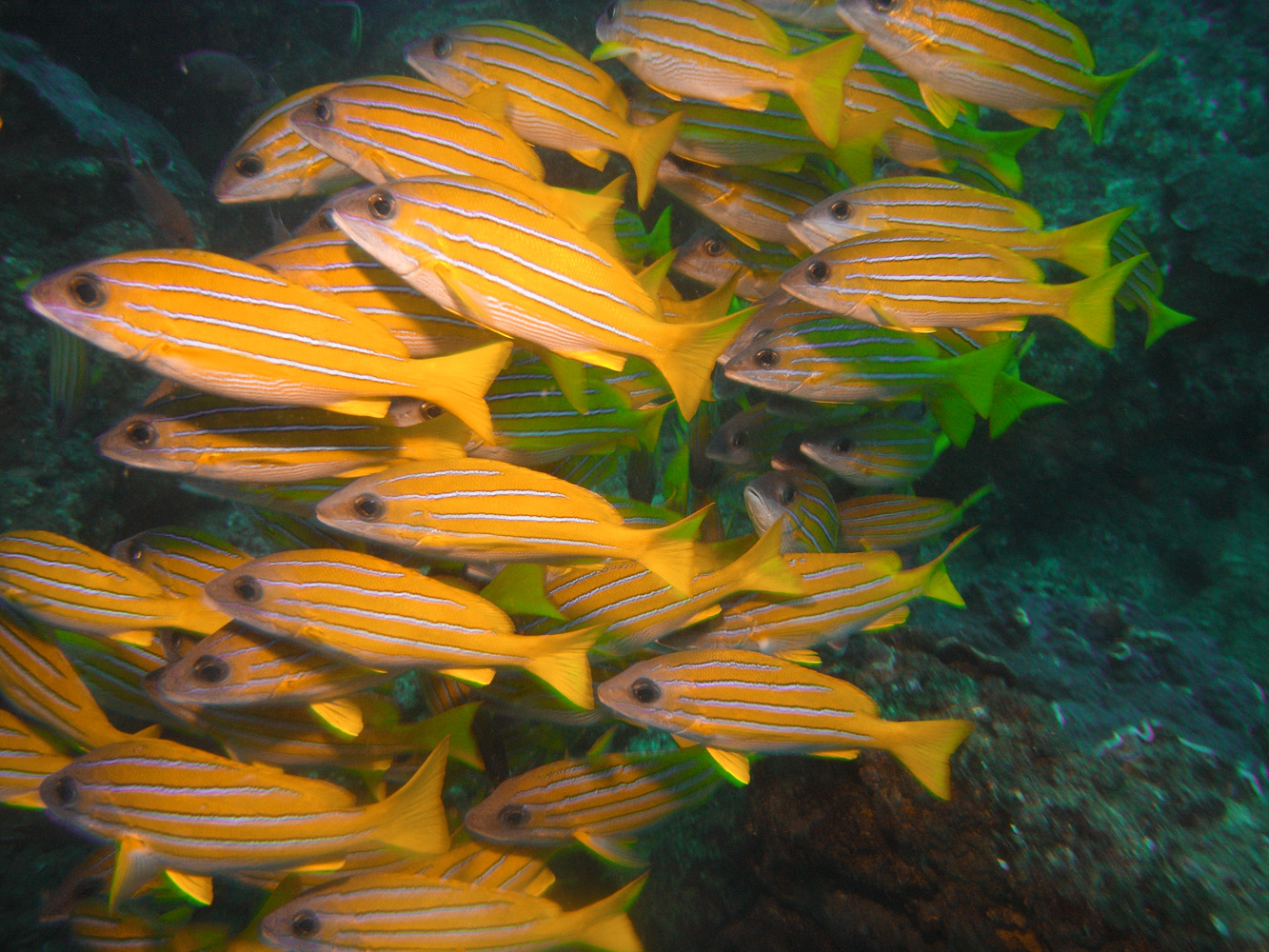 Mozambique_Vilankulos_Maputo_Tofo_Tofo_Peri_Peri_Divers, Walhai