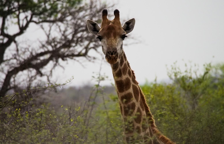 Südafrika_Southafrica_Kruger_Krüger_Nationalpark-14