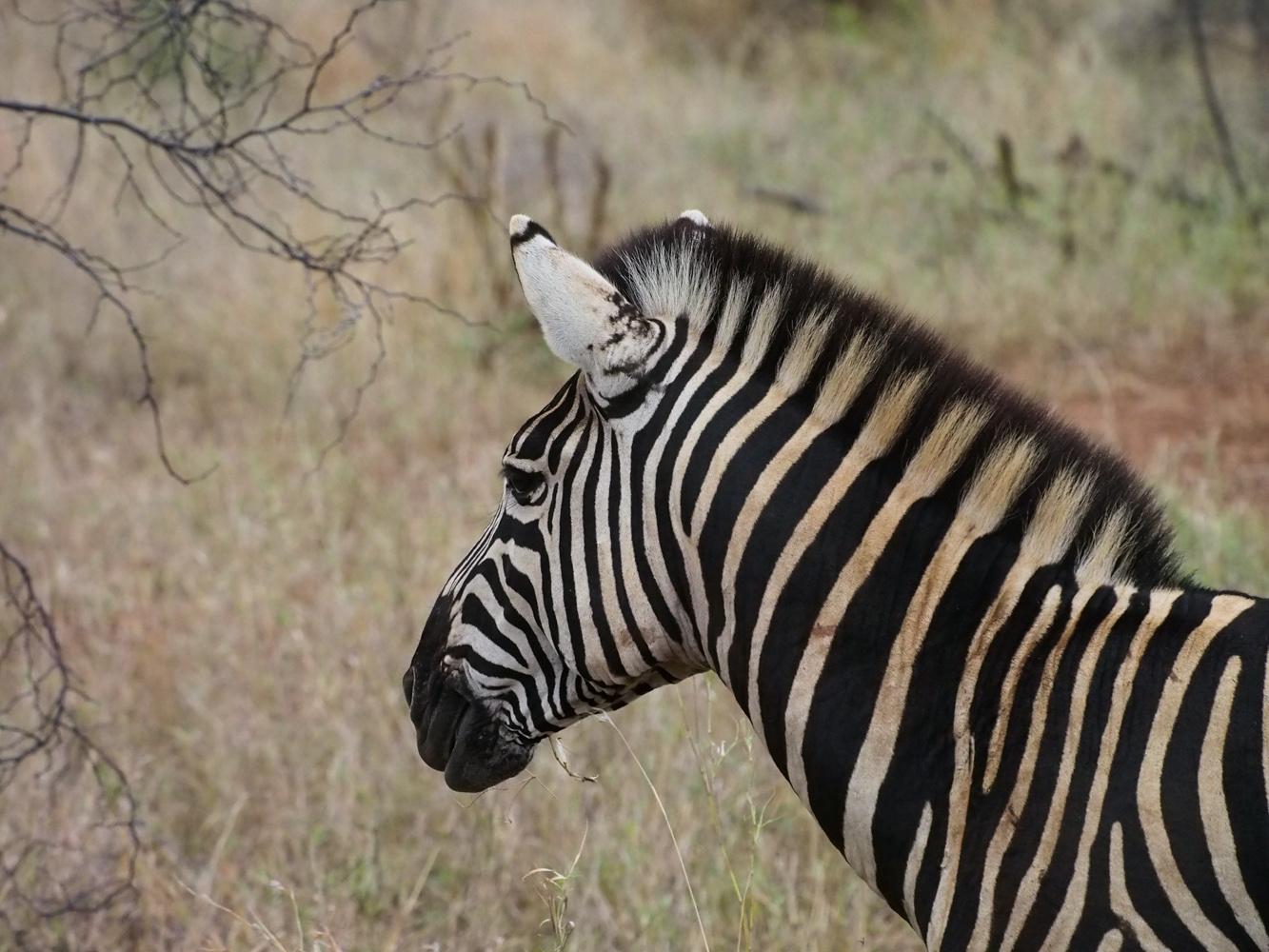 Südafrika_Southafrica_Kruger_Krüger_Nationalpark-4