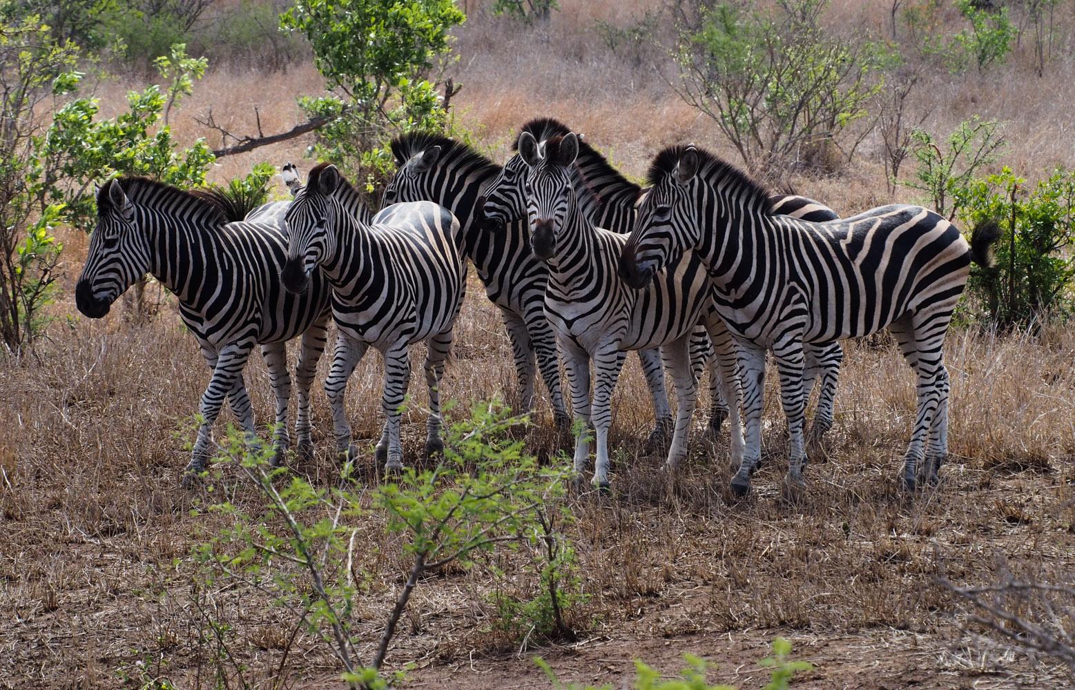Südafrika_Southafrica_Kruger_Krüger_Nationalpark-40