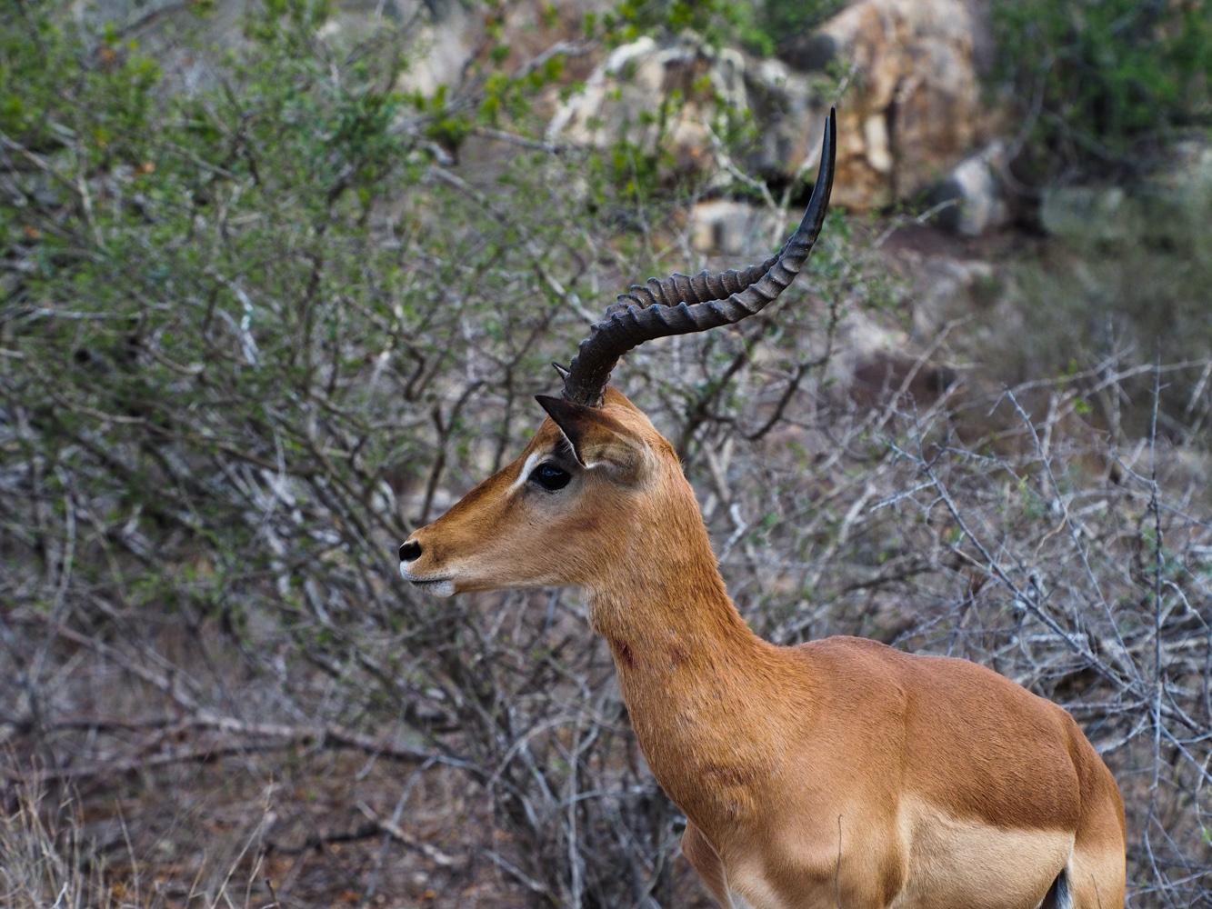 Südafrika_Southafrica_Kruger_Krüger_Nationalpark-43