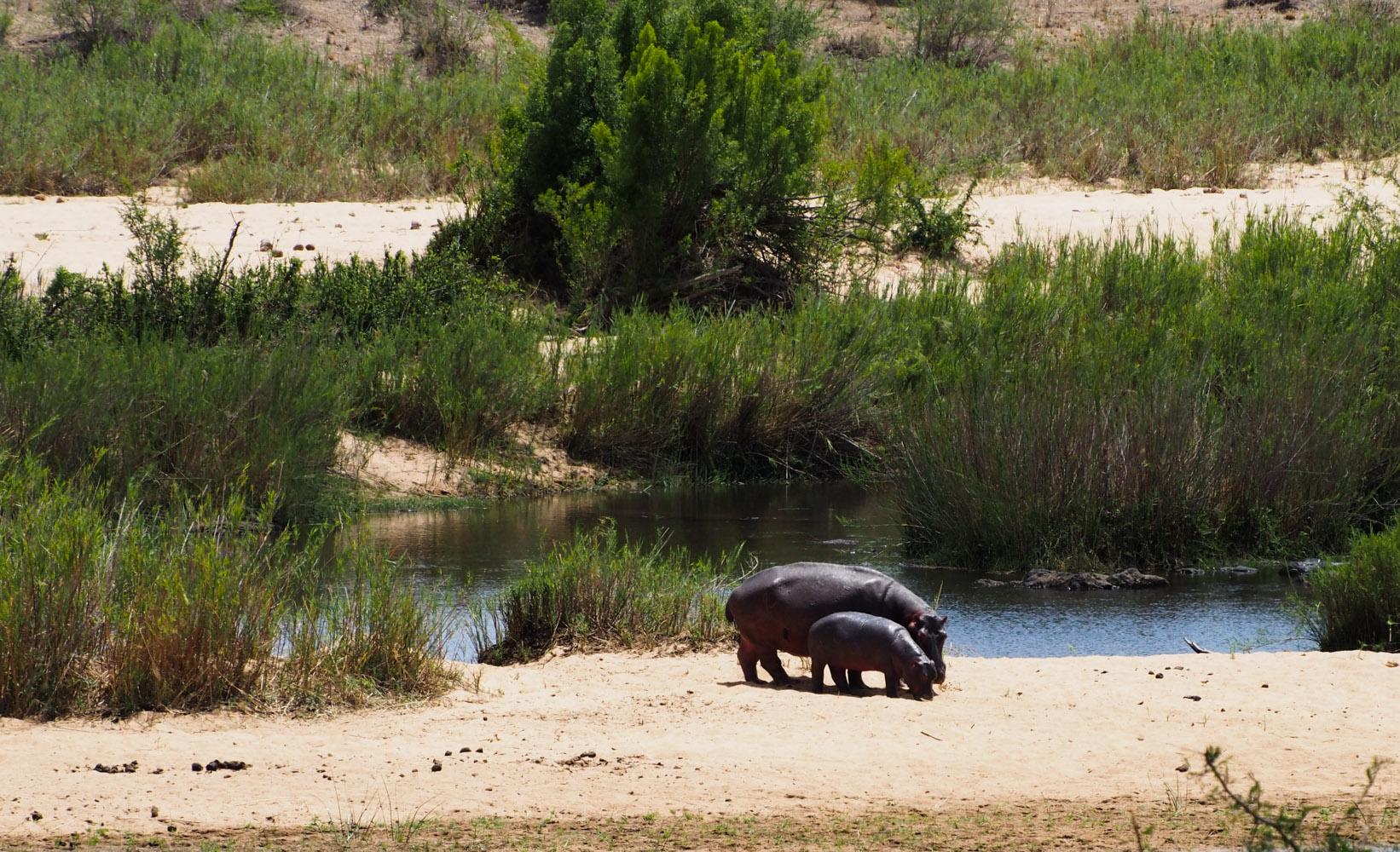 Südafrika_Southafrica_Kruger_Krüger_Nationalpark-45