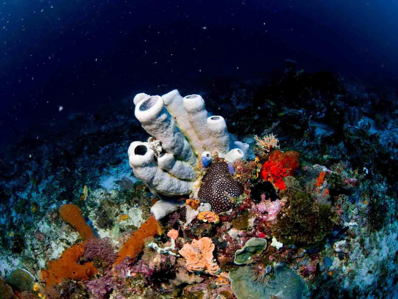 Raja Ampat Indonesien Tauchsafari, Nemo, Wobbegong, Teppichhai, Manta