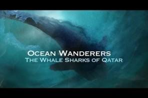 Ocean Wanderers – Whale Sharks