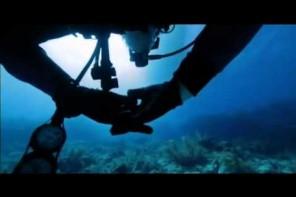 Räuber der Ozeane