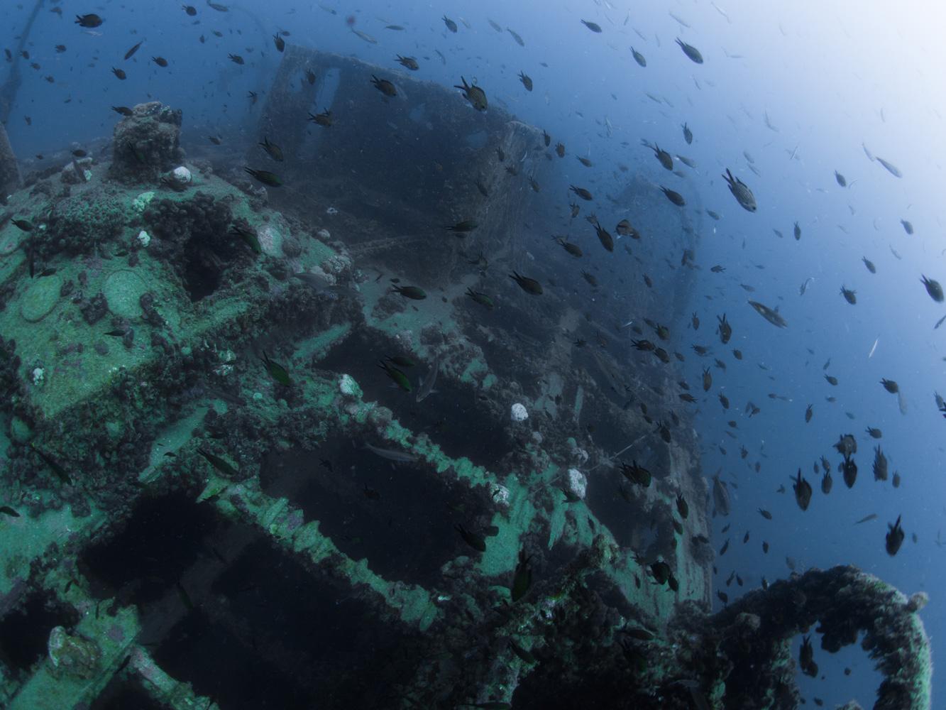 Vrsar_Kroatien_Triton_Diving-10