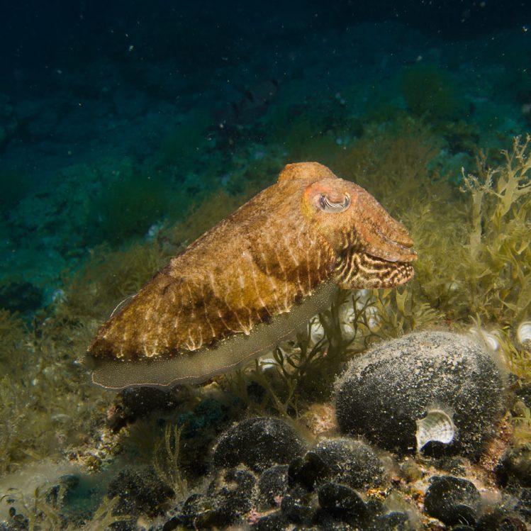 Vrsar_Kroatien_Triton_Diving-3