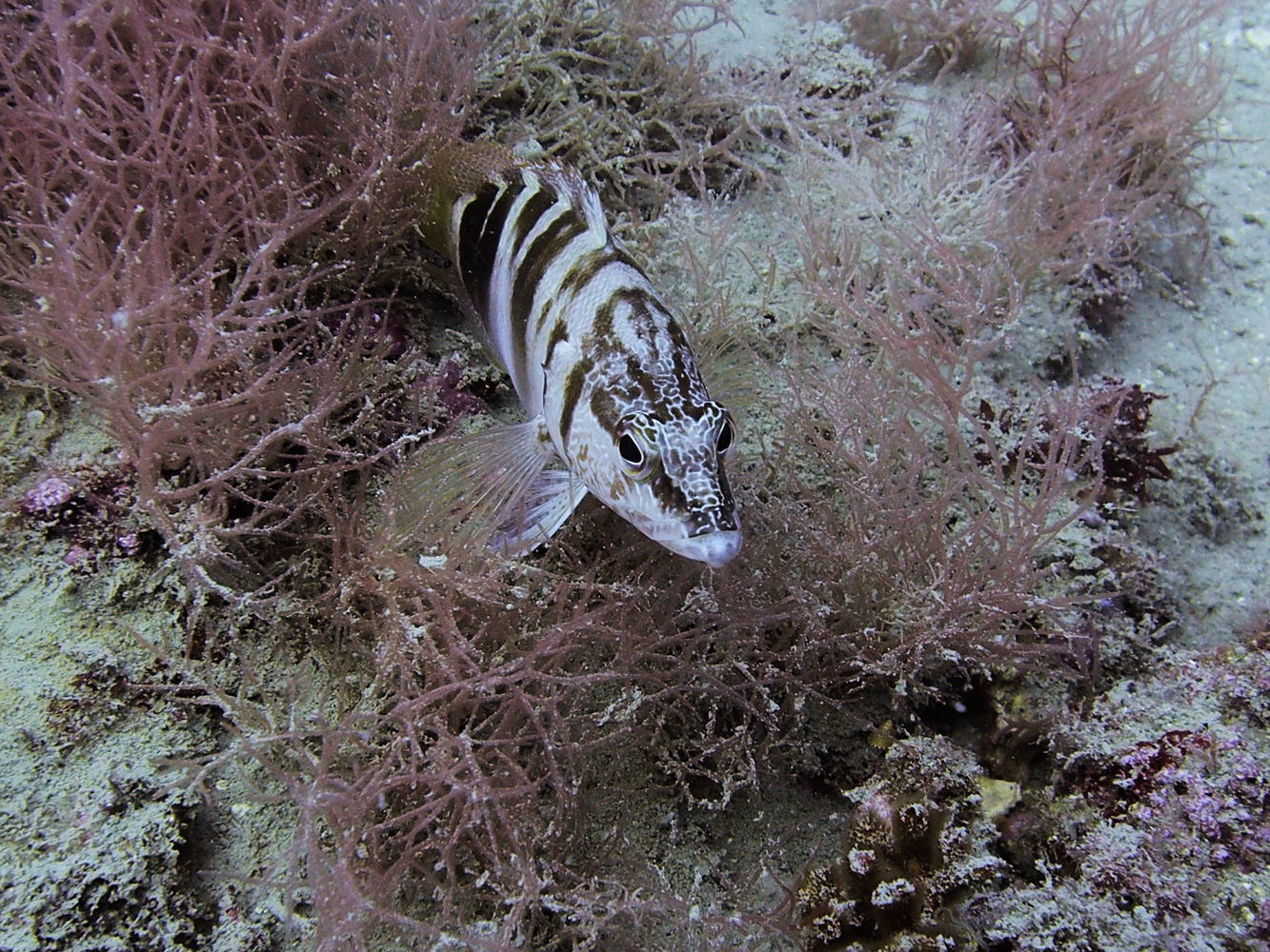 Vrsar_Kroatien_Triton_Diving-36