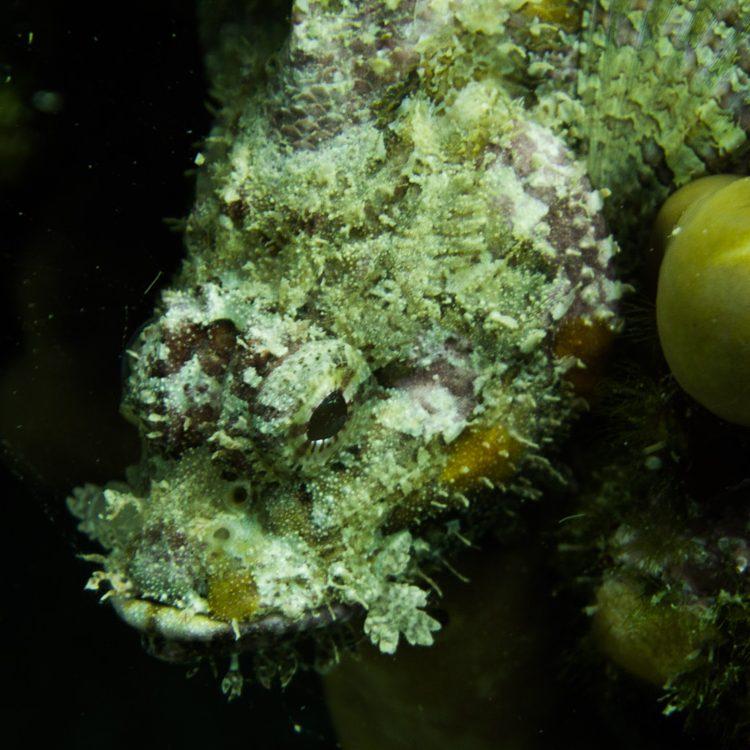 Vrsar_Kroatien_Triton_Diving-41