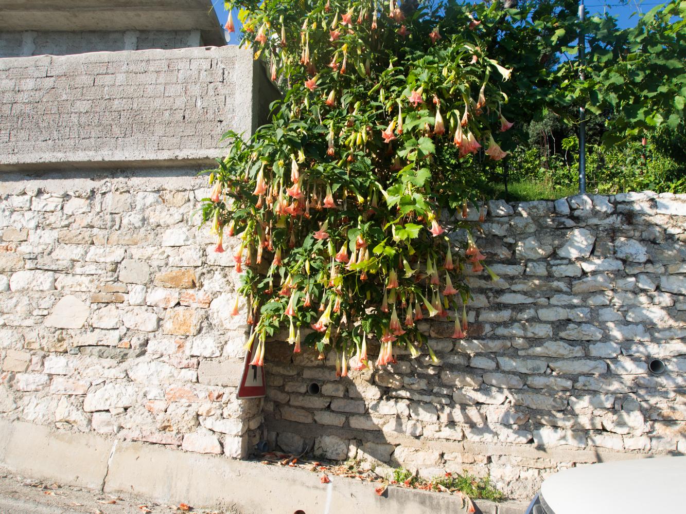 Albania_Lukove (1 of 1)-31