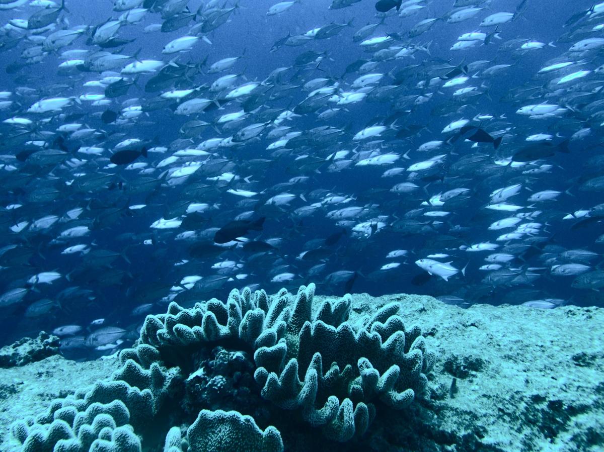 Palau_Tropic Dancer_Blue Hole_Blue Corner_Chandelier Cave-29