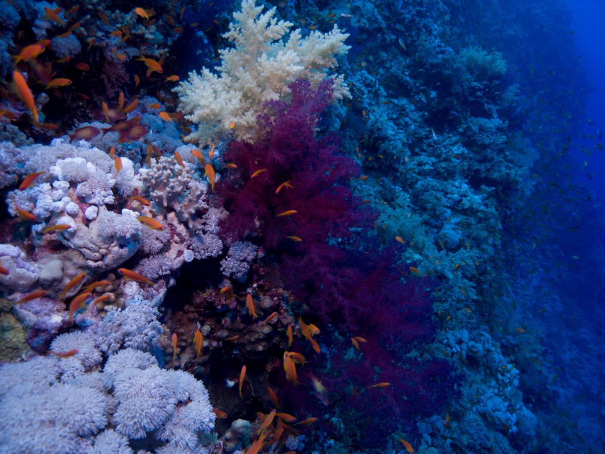Ägypten_Individualreise_Auto_Lahami_Marsa_Alam_El_Quesir_Marsa_Shagra_Lahamy_Red_Sea_Diving_Safari-10