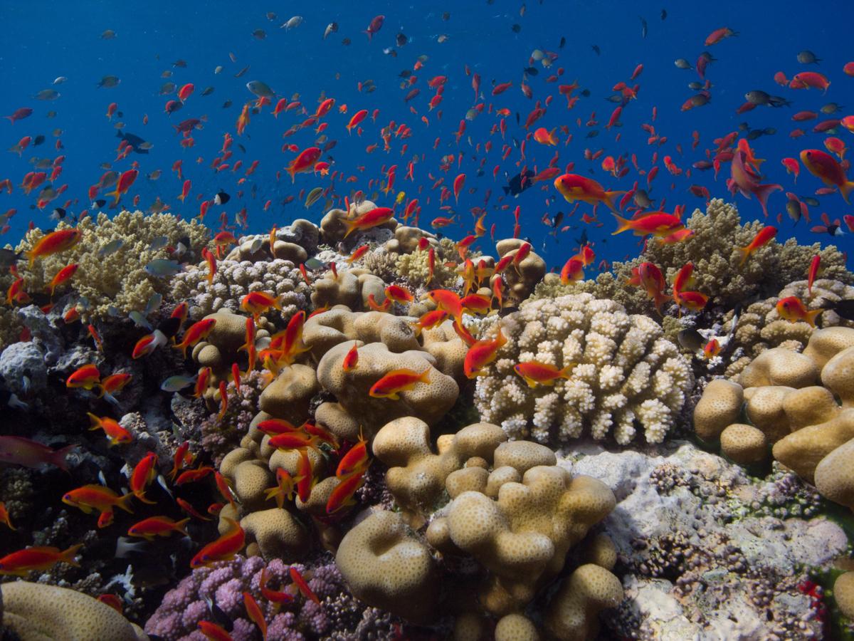 Ägypten_Individualreise_Auto_Lahami_Marsa_Alam_El_Quesir_Marsa_Shagra_Lahamy_Red_Sea_Diving_Safari-6