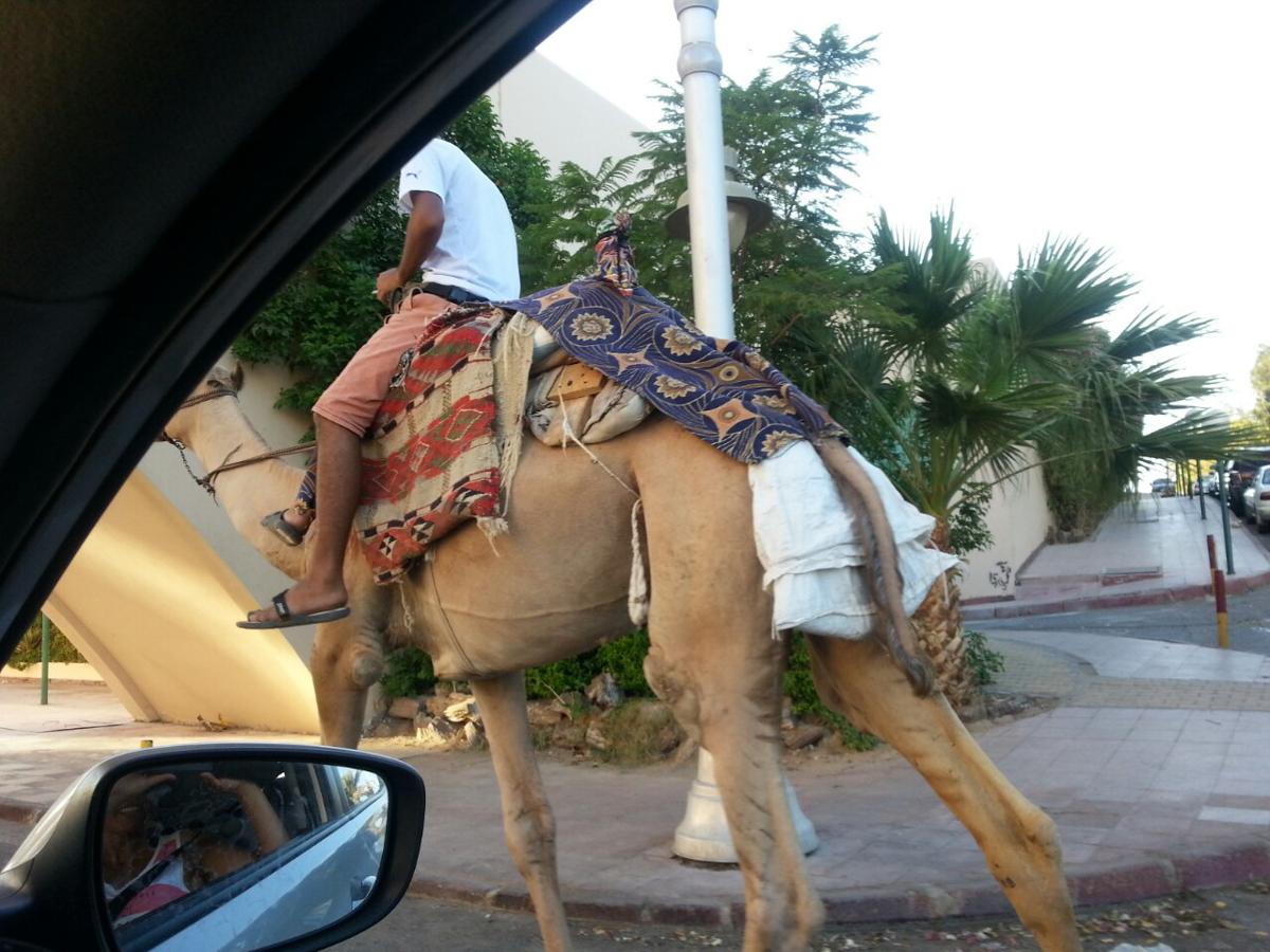 Ägypten_Individualreise_Auto_Lahami_Marsa_Alam_El_Quesir_Marsa_Shagra_Lahamy_Red_Sea_Diving_Safari_Hurghada-19