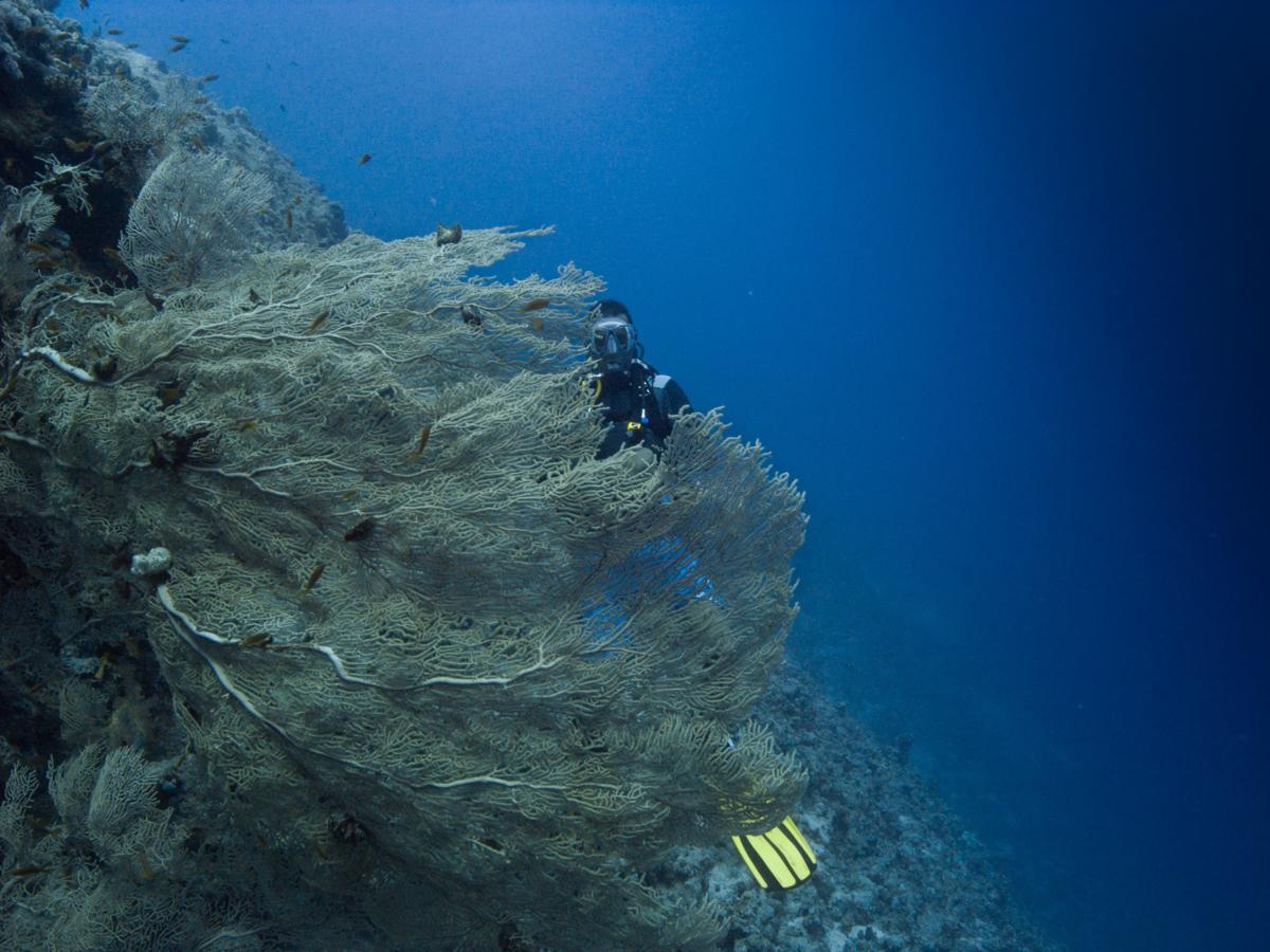 Ägypten_Individualreise_Auto_Lahami_Marsa_Alam_El_Quesir_Marsa_Shagra_Lahamy_Red_Sea_Diving_Safari_Hurghada-32