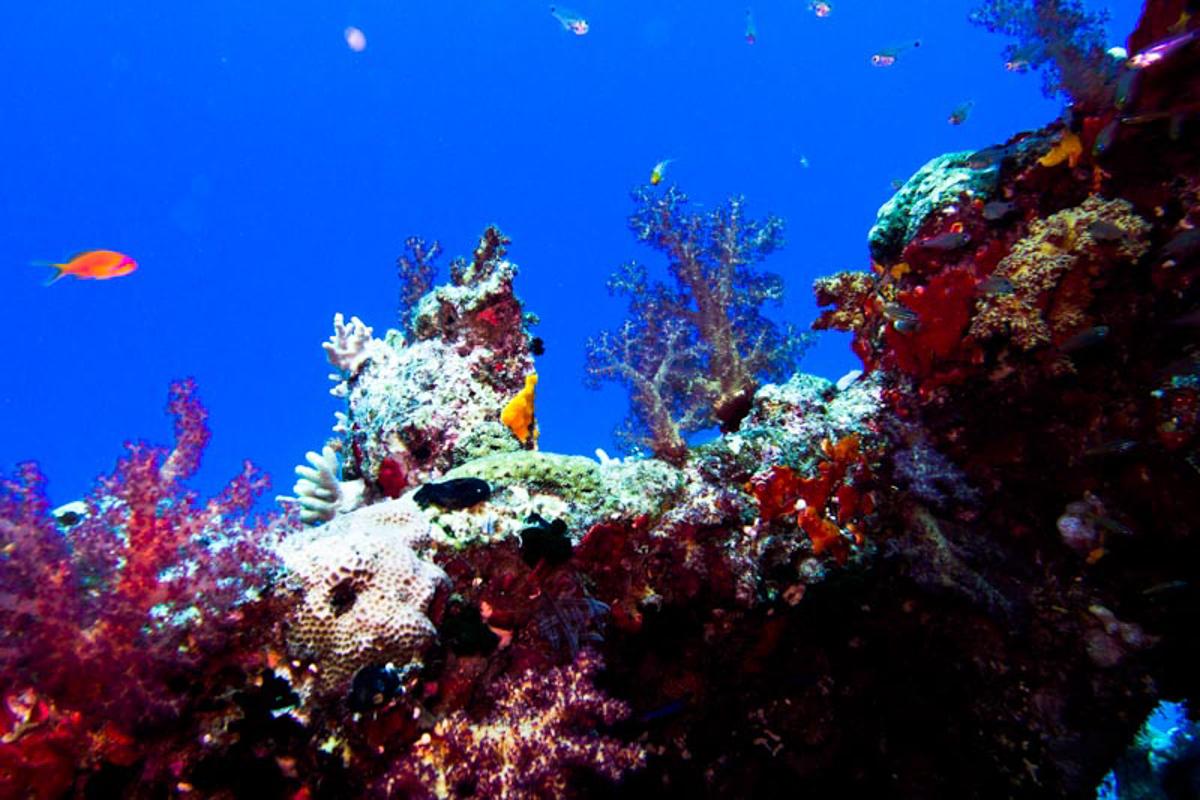 Ägypten_Nordtour_Wracks_Blech_Ras_Mohammed_Golden_Dolphin_II_Zwei
