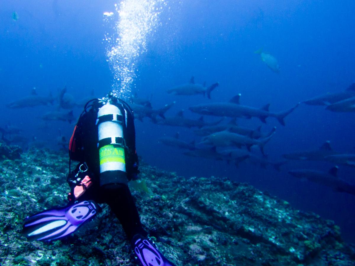 Costa_Rica_Cocos_Island_Undersea_Hunter_Hammerhaie-12