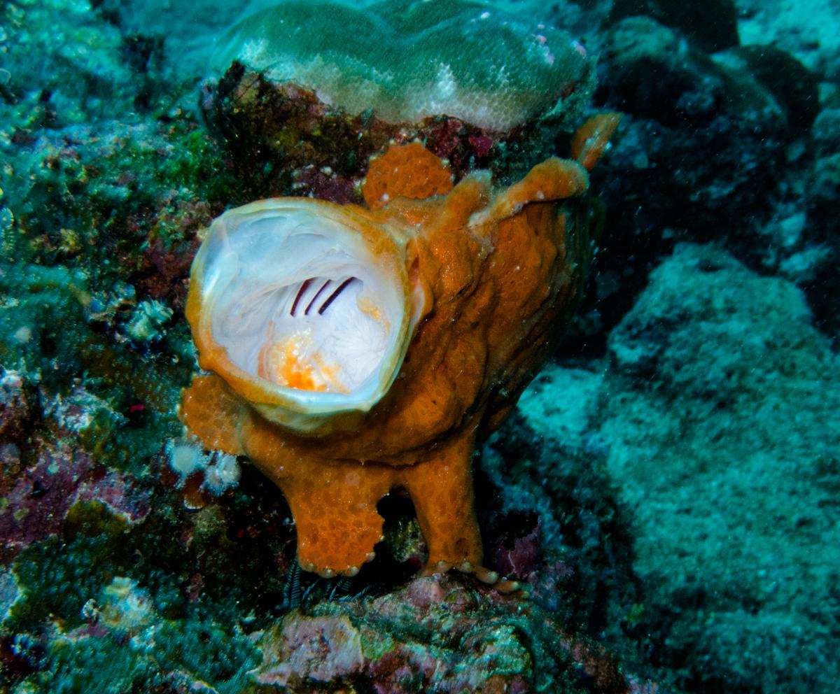 Costa_Rica_Cocos_Island_Undersea_Hunter_Hammerhaie-19