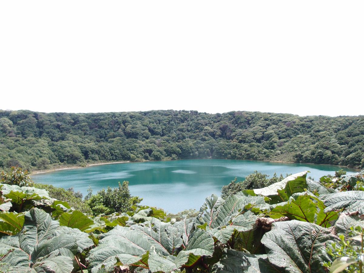 Costa_Rica_Cocos_Island_Undersea_Hunter_Hammerhaie-4