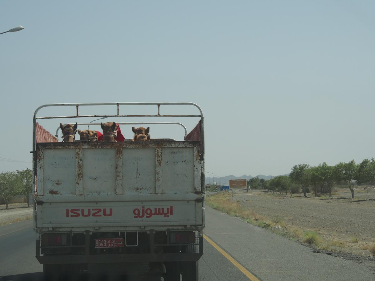 Oman_Muscat_Sallalah-18