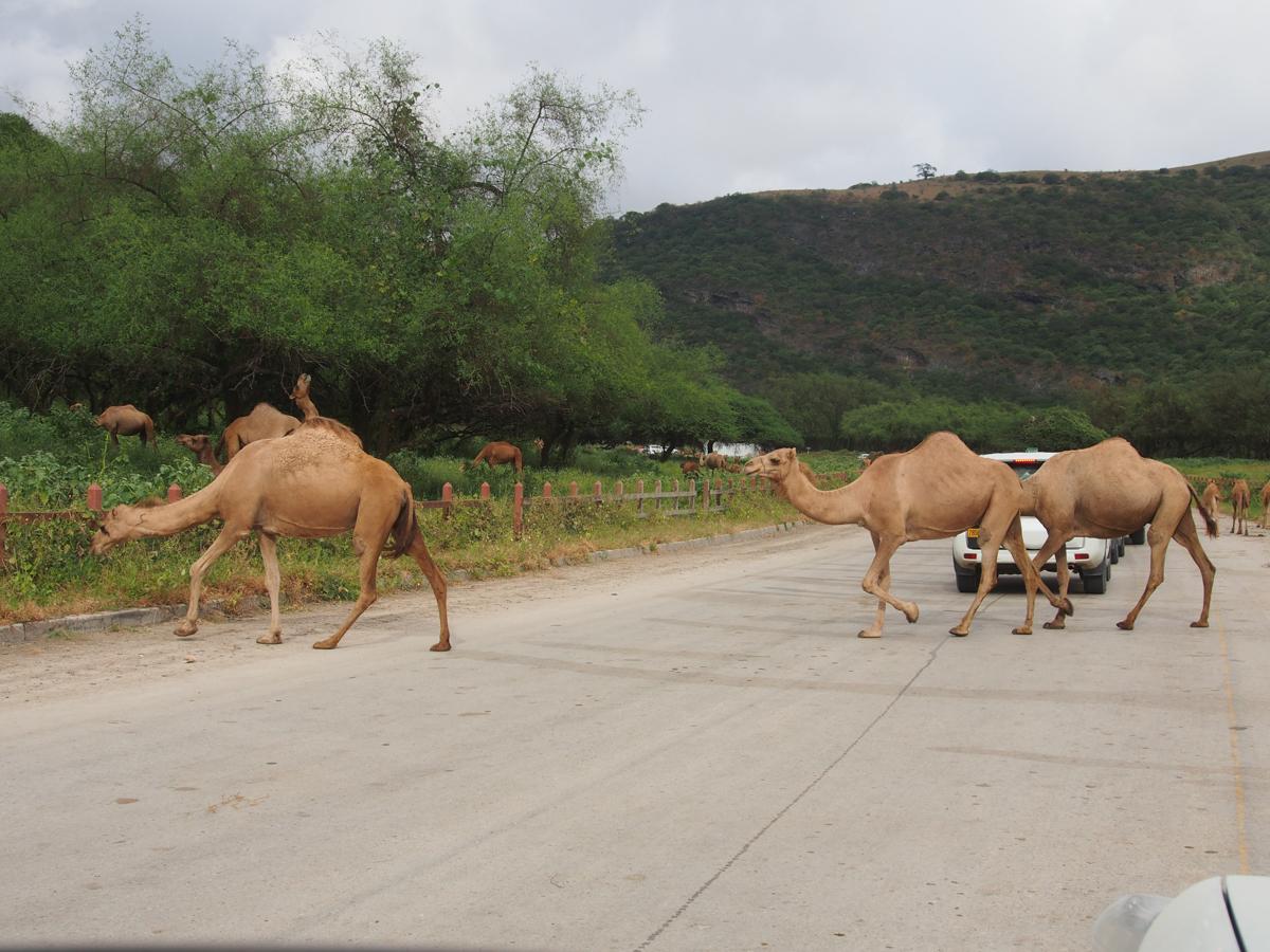 Oman_Muscat_Sallalah-25