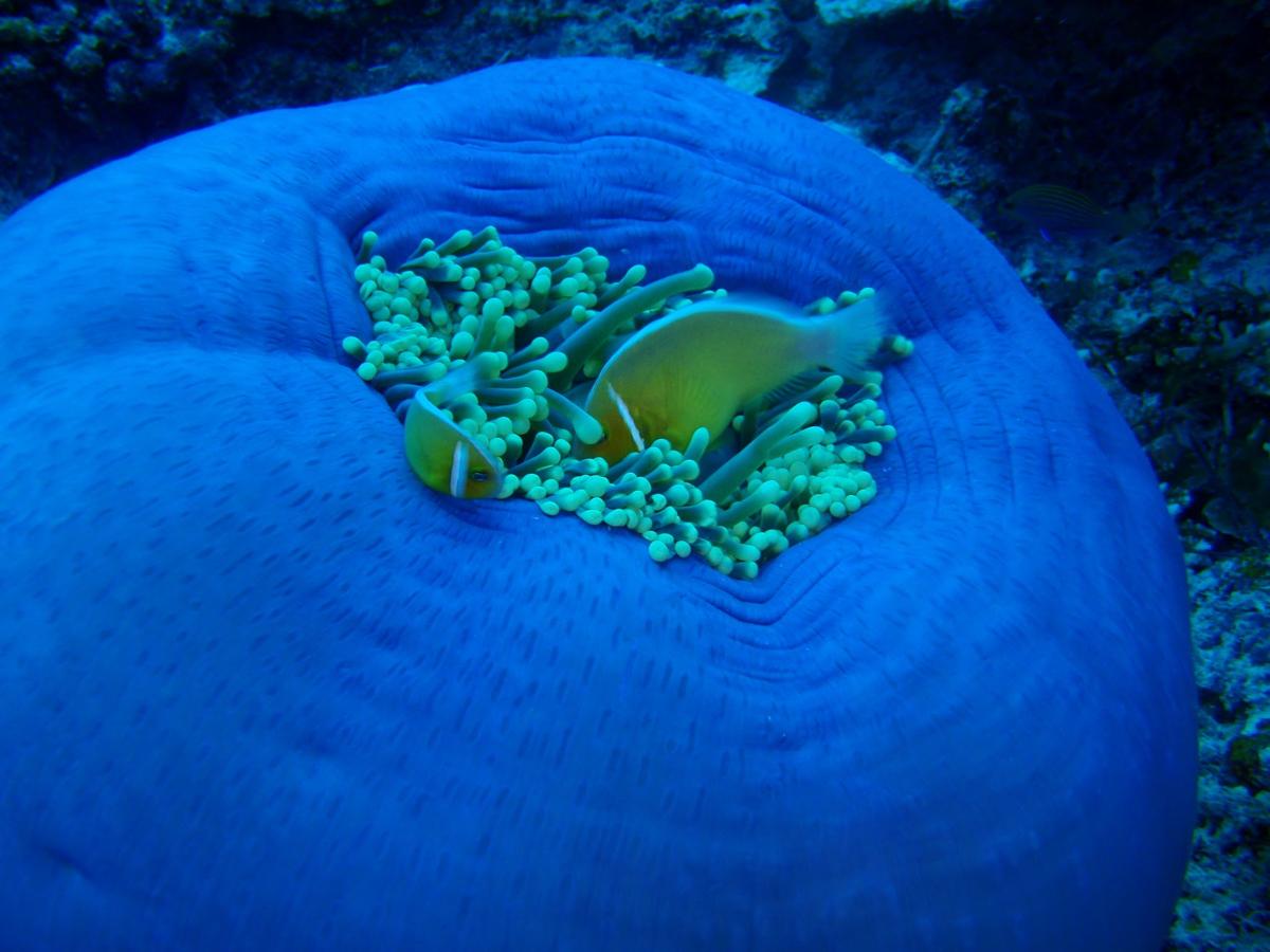 Palau_BlueCorner_BlueChannel_Sharks-17