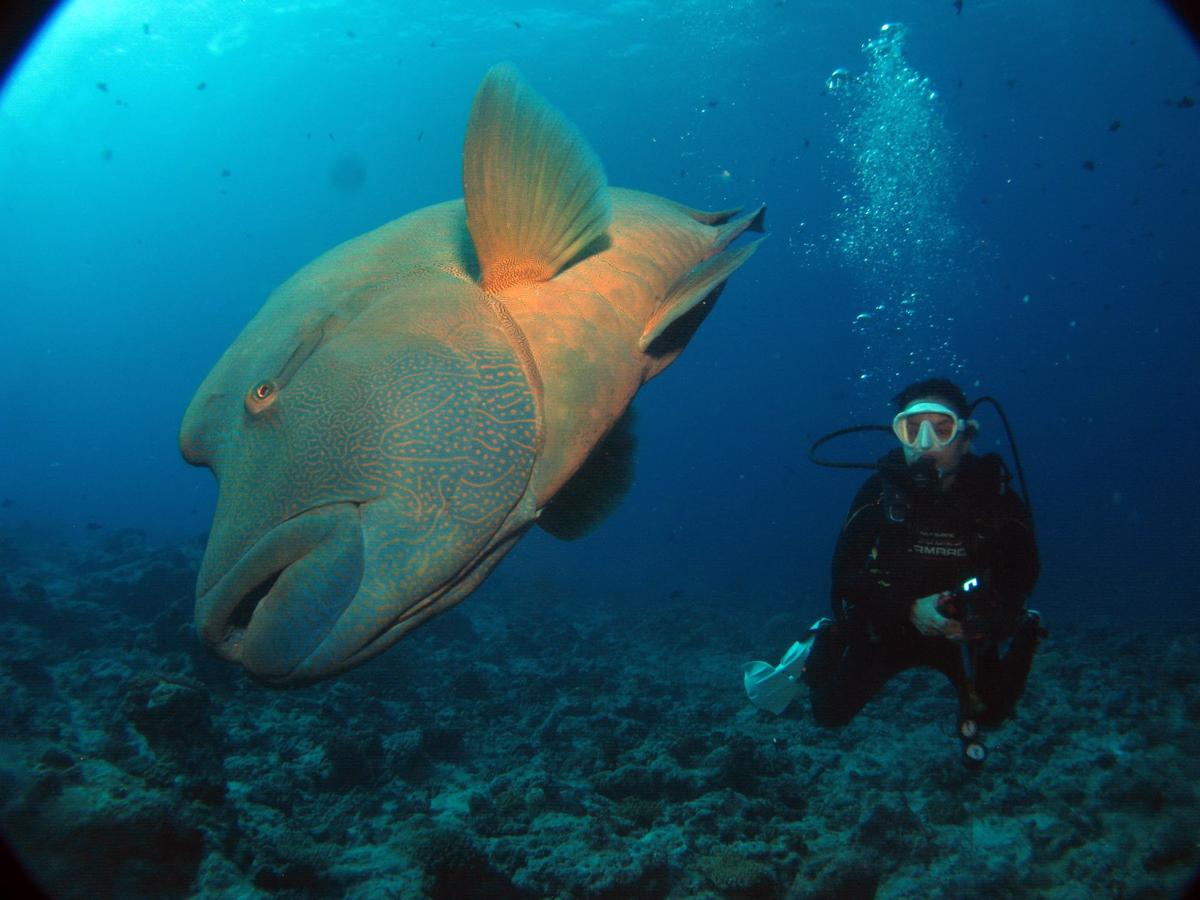 Palau_BlueCorner_BlueChannel_Sharks-3