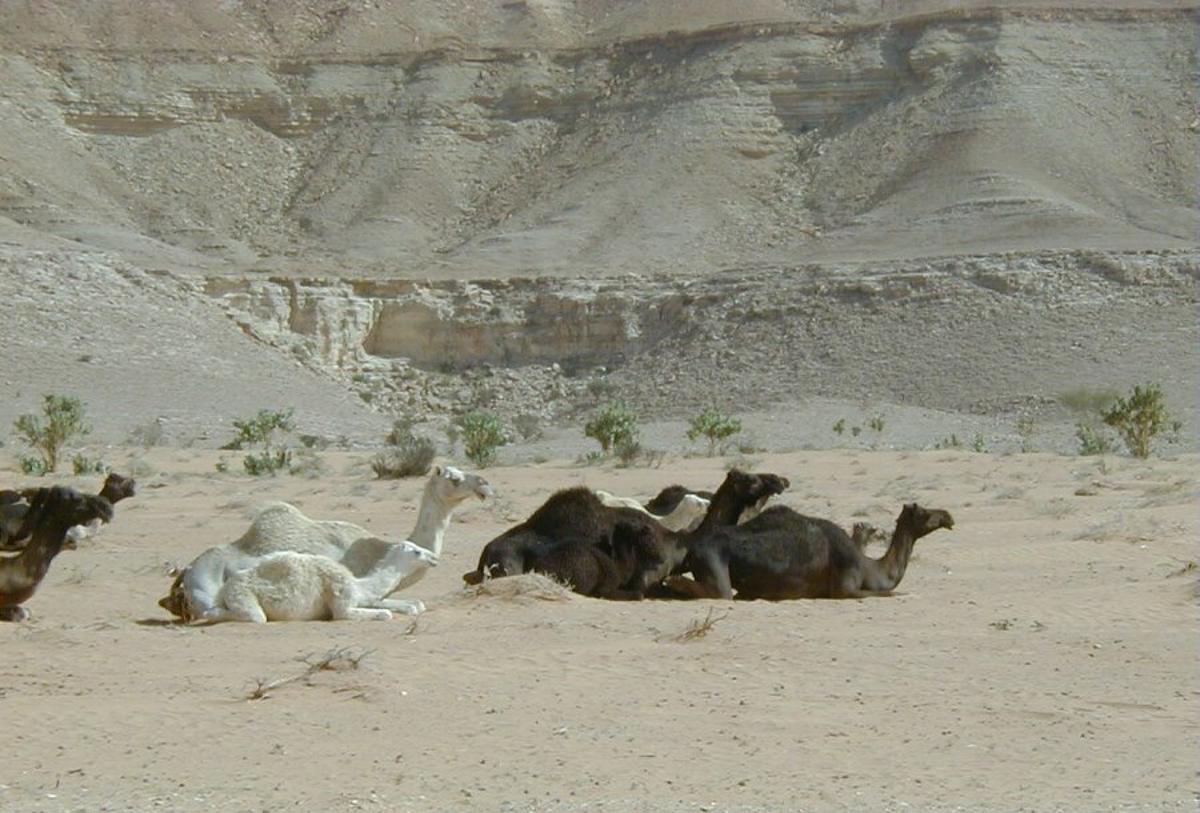 Shams_Alam_Hotel_Wadi_Gimal_Gemal_Nationalpakr_Wüste_Marsa_Alam-3