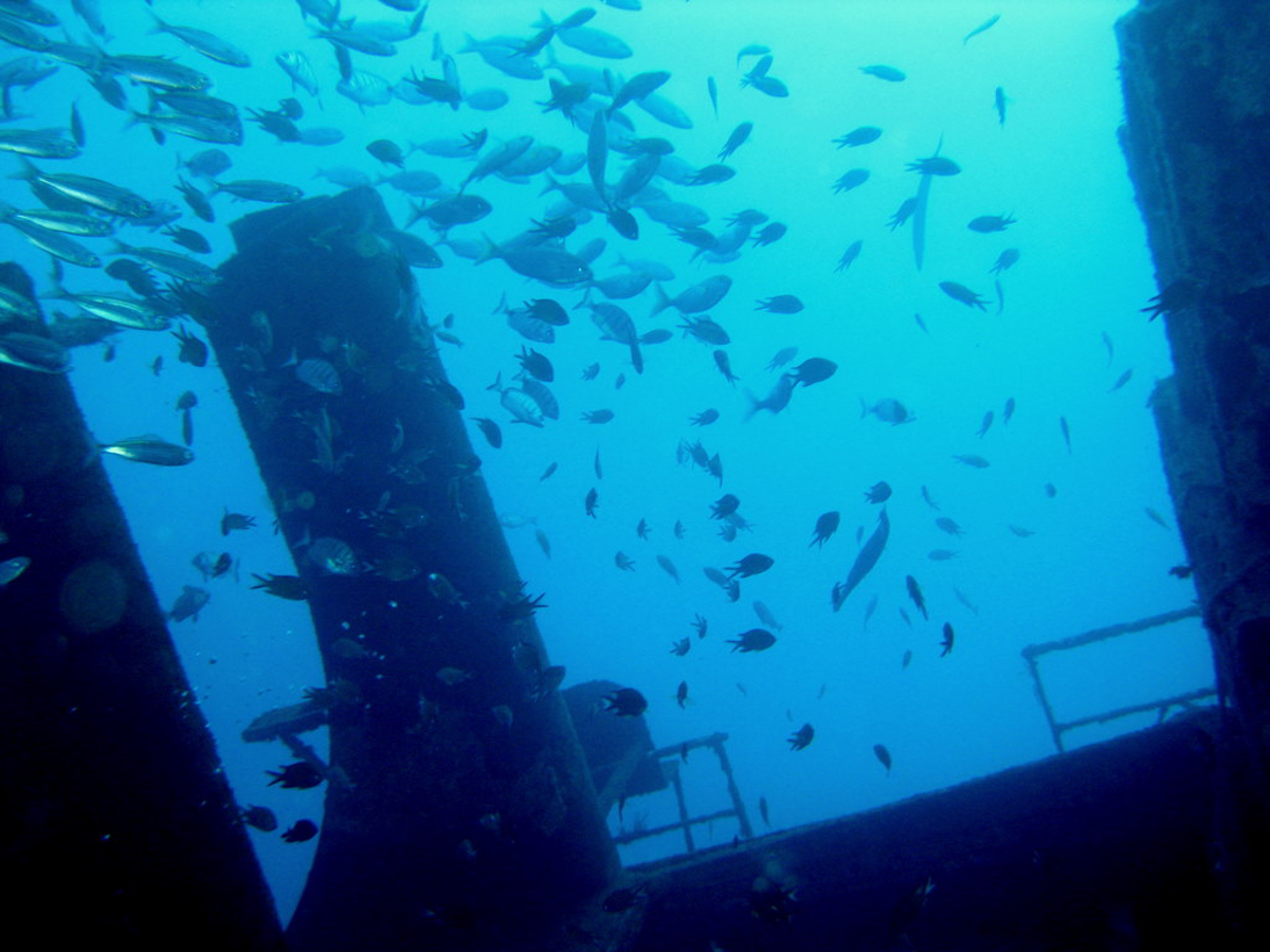 Teneriffa_Kanarische_Inseln_Puerto_de_la_Cruz-4