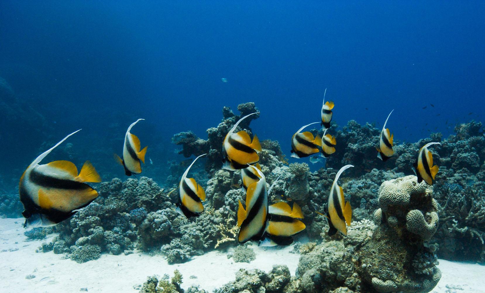 Lahami_Bay_Rotes_Meer_Red Sea Diving Safari_-10