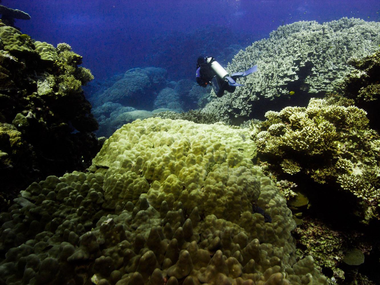 Lahami_Bay_Rotes_Meer_Red Sea Diving Safari_-2