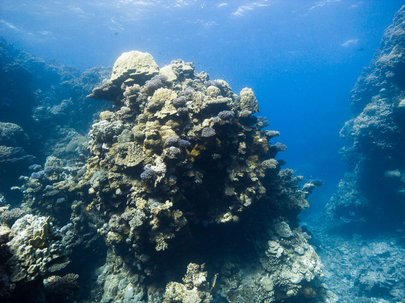 Lahami_Bay_Rotes_Meer_Red Sea Diving Safari_-4