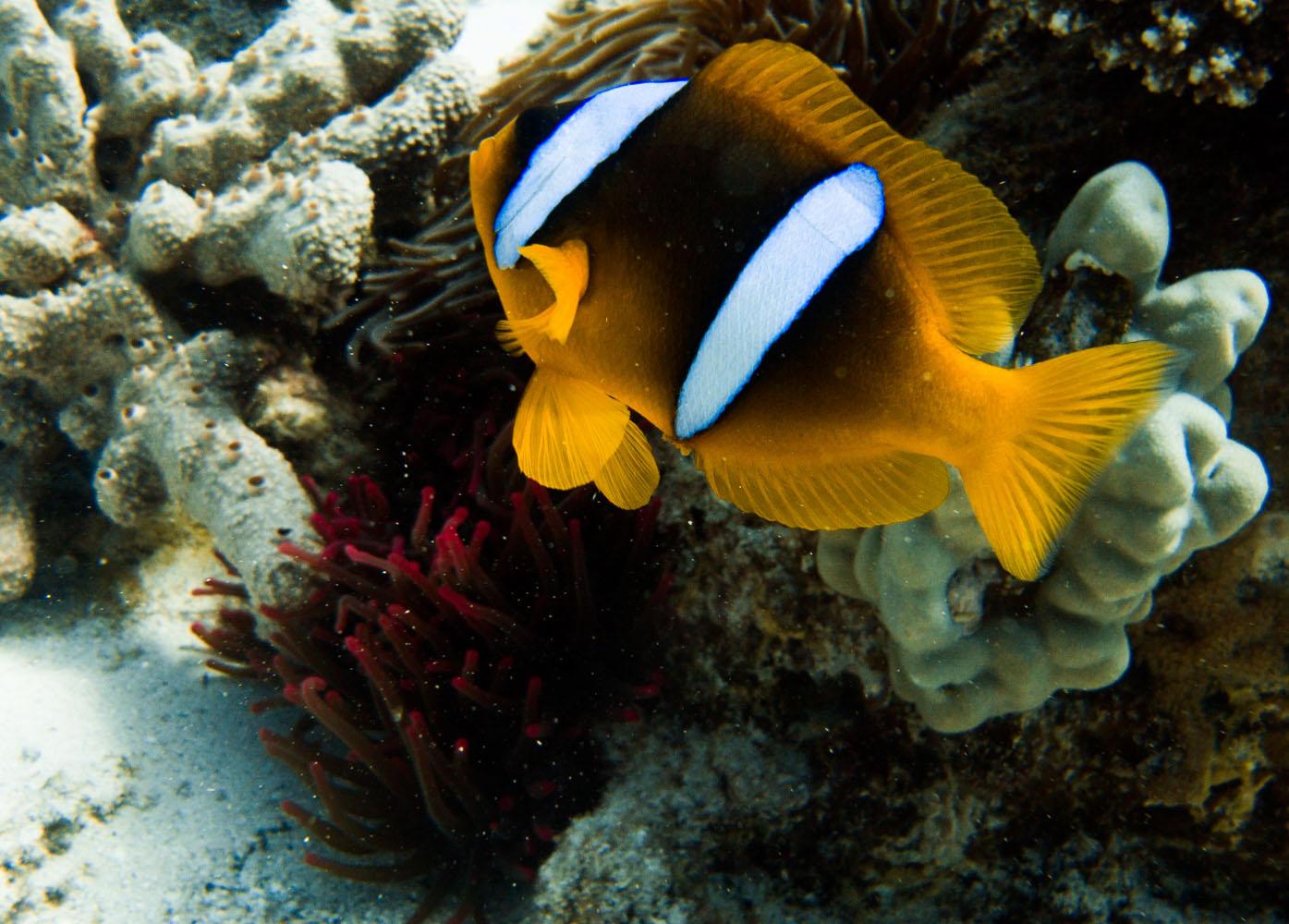 Ägypten_Lahami_Bay_Rotes_Meer_Red Sea Diving Safari_Marsa_Alam