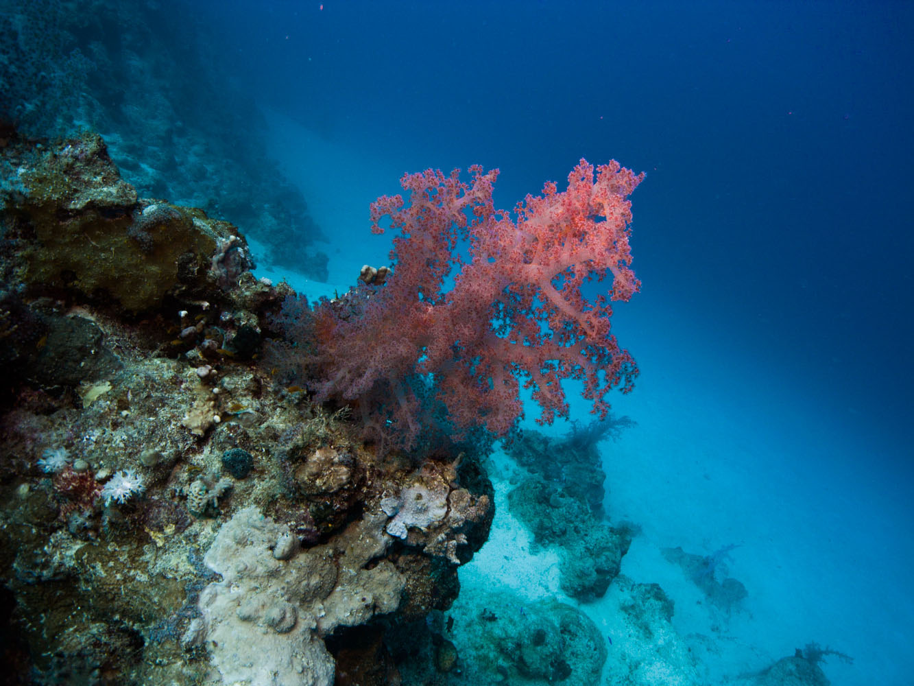 Marsa_Alam_Shagra_Red_Sea_Diving_Safari_Rotes_Meer-5