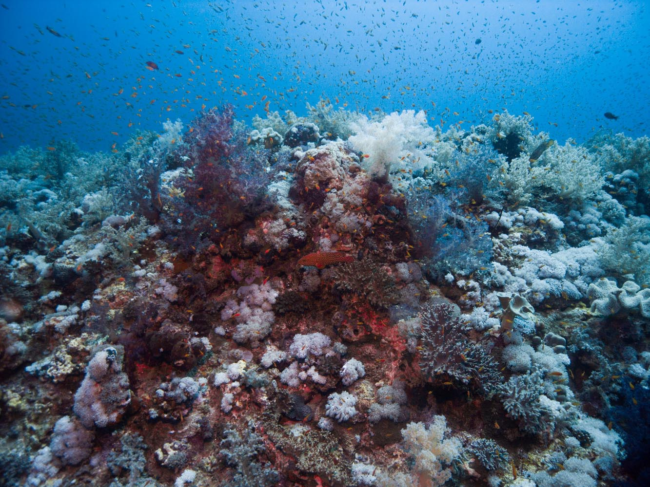Marsa_Alam_Shagra_Red_Sea_Diving_Safari_Rotes_Meer-7