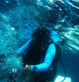 Mozambique_Vilankulos_Maputo_Tofo_Tofo_Peri_Peri_Divers, WalhaiMozambique_Vilankulos_Maputo_Tofo_Tofo_Peri_Peri_Divers, Walhai